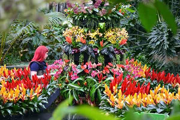 Art Rotterdam, taste of Paris, Orchids: gli eventi di febbra... OF OSSERVATORIO FINANZIARIO