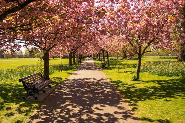 Viaggiare nel mese dei fiori: da Londra all'Australia 7 even... OF OSSERVATORIO FINANZIARIO