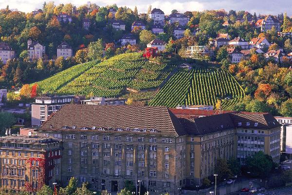 Nella terra del vino e del gusto: alla scoperta dell'enogast... OF OSSERVATORIO FINANZIARIO